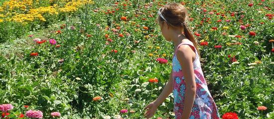 Eugene, OR: U-Pick flowers near Junction City