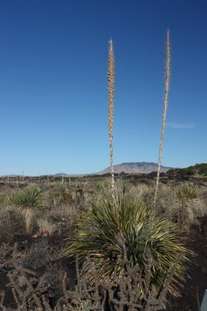 Carrizozo, Nuovo Messico: photo0.jpg