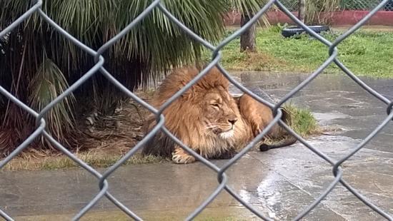 Faruk Yalcin Zoo