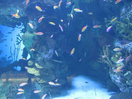 20151128 163839 Picture Of Georgia Aquarium