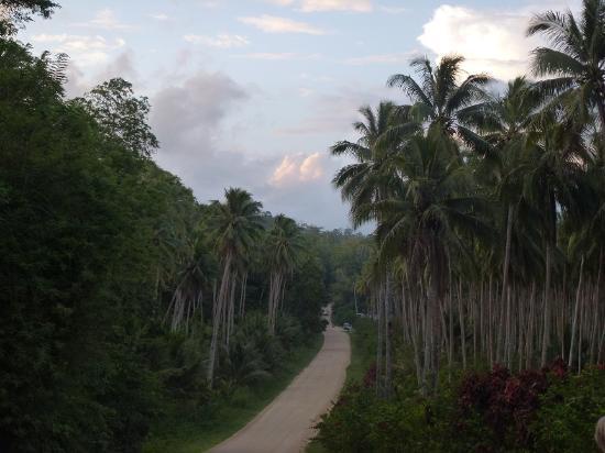 Rubio Plantation Retreat: Boluminski Hwy passing through Rubio