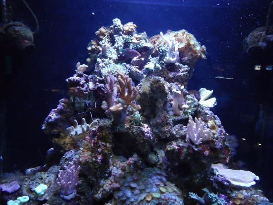 Picture of l aquarium de barcelona barcelona for Aquarium de barcelona