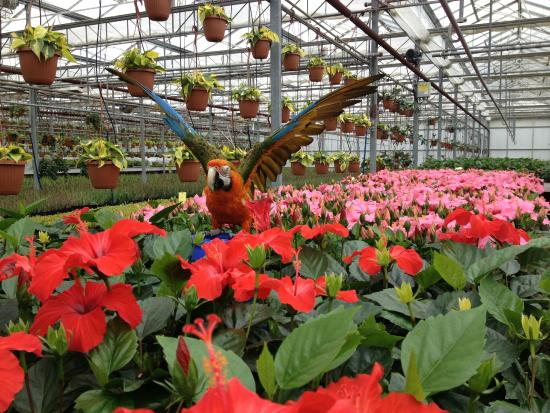 Kingsville, Kanada: Colasanti's grows thousands of plants every year!