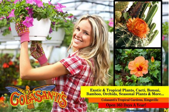 Kingsville, Kanada: Our retail plant greenhouse carries seasonal plants, bonsai, orchids, cacti and tropicals