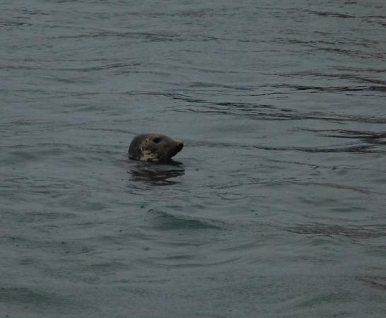 Morar, UK: A swimmer in Mallaig Harbour