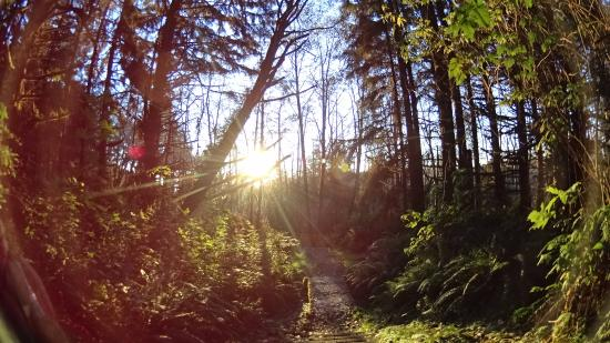 Prairie Creek Redwoods State Park: Beginning of James Irving trail by Fern Valley