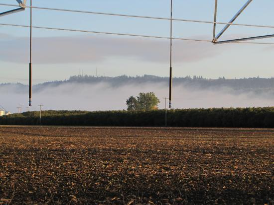 Independence, OR: Road to Rogue Farm in early morning with fog from river.