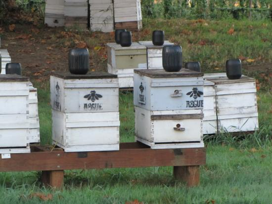 Independence, OR: Bee hives at Rogue Farm.