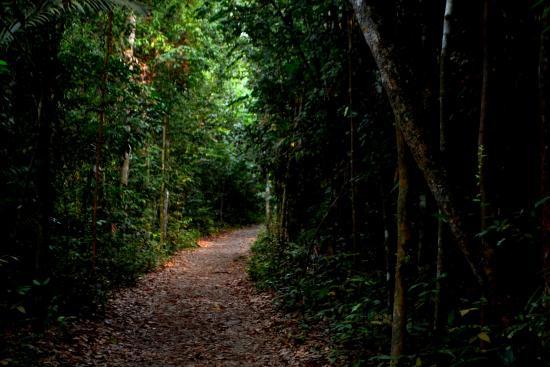 Bildresultat för deep woods