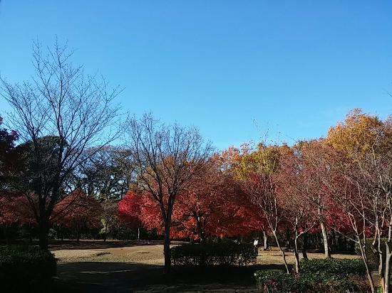 Maioka Park