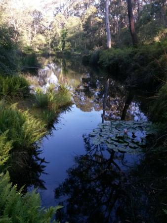 Blackheath, Avustralya: IMG_20151205_182947_large.jpg