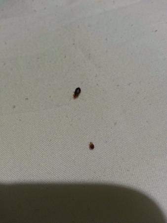 Apple 1 Hotel: bugs in the bed