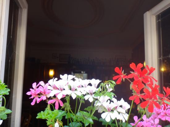 Dobel: Цветочки на окнах