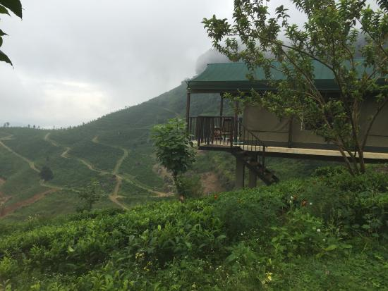 Madulkelle Tea and Eco Lodge: Double Room Tent