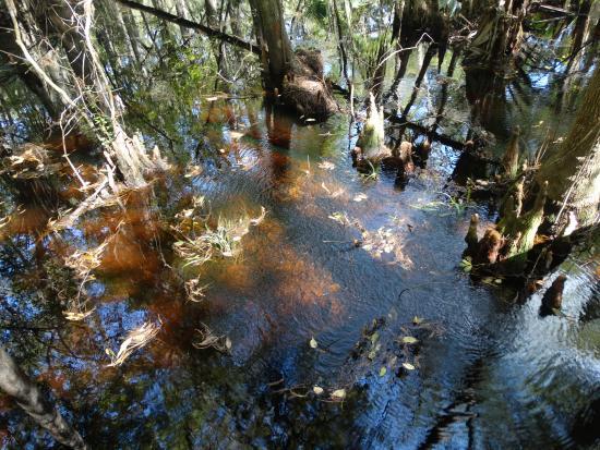 Sebring, FL: waterway