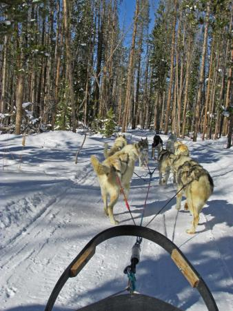 Dog Sled Rides of Winter Park: Many trails are through wooded countryside
