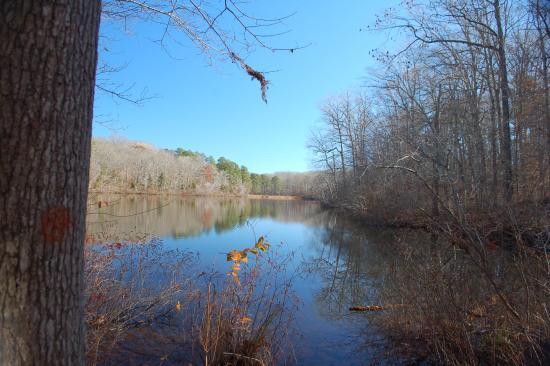 Wildersville, TN: Cub Lake at Cub Creek Trail