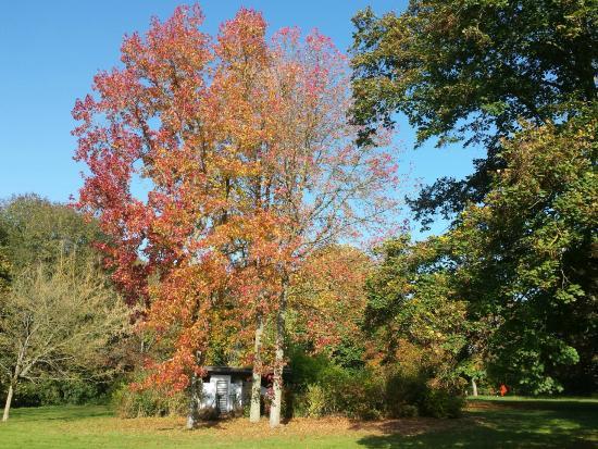 La Boissiere-Ecole, Франция: Le parc en automne