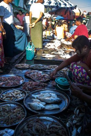 Fish Market : holnov-5081_large.jpg