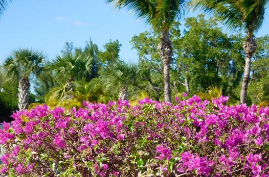 Boca Grande, FL: Colorful