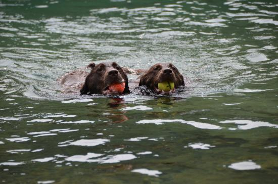 Salmon River: LUV 2 Swim