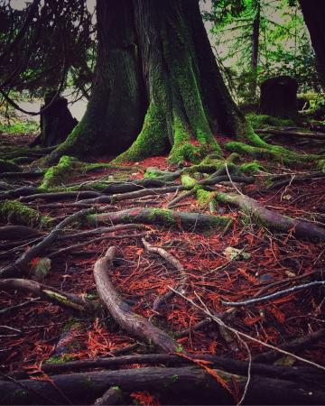 Courtenay, Kanada: The woods are very beautiful all year long.