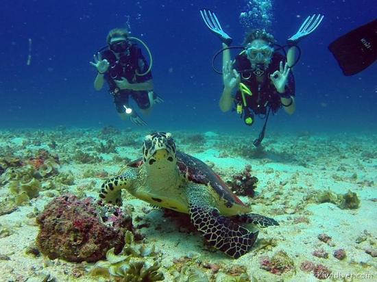 Kiwidiver Dive Centre: So good!