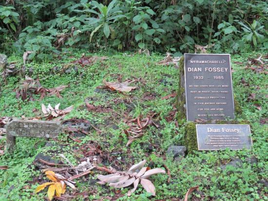 dian fossey research paper Finally, mr mowat's (and dian fossey's) descriptions of the ''turf battles''   karisoke continues as a research center, with the full support of the.