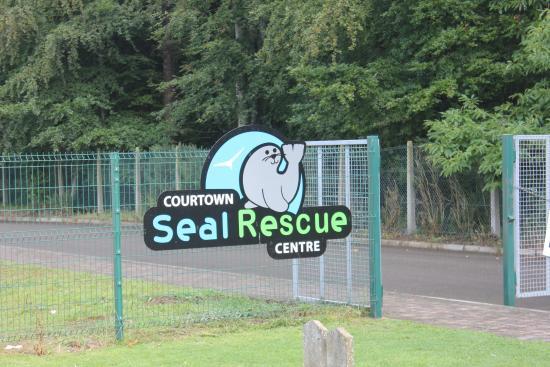 Dingle Wildlife & Seal Sanctuary: Seal sanctuary