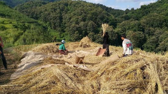 Golden Triangle Tours - Day Tours: Hill Tribe works : Hill Tribe Day Trek with The Golden Triangle Tous Company