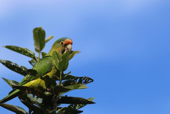Hotel Belmar: Parrot on grounds