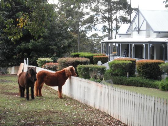 Mount Tamborine, أستراليا: Aaronlea