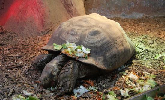 une tortue photo de parc aquarium les naiades ottrott tripadvisor