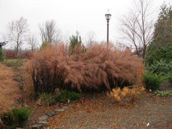 Beautiful Grasses Picture Of Botanical Garden Of The Ozarks Fayetteville Tripadvisor