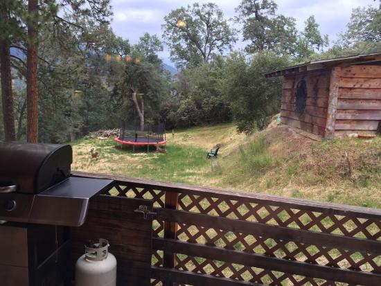 Evergreen Haus: photo1.jpg