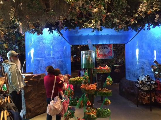 Rainforest Cafe  Boardwalk Atlantic City Nj  United States