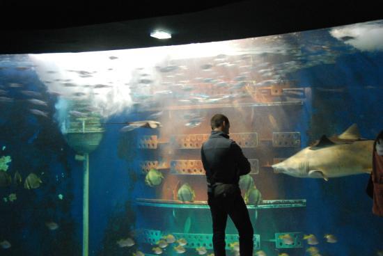 grand aquarium photo de grand aquarium malo tripadvisor