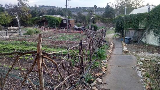 Landscape - Yarok Az Organic Goat Farm Photo