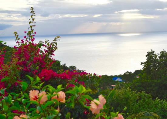 Harmonie Tropicale