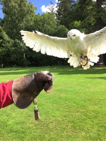 Dalhousie Castle Falconry Snowy Owl We Got To Fly On Our Visit Coming In