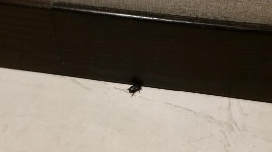 Bimini: Bugs crawling in from side door being open all day