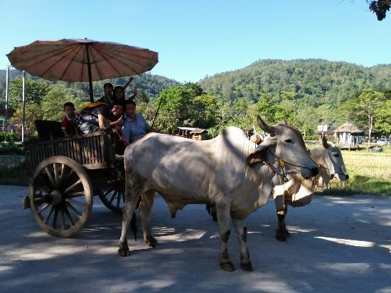 湄登大象训练营