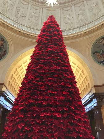 Weihnachtsbaum wiesbaden freudenberg