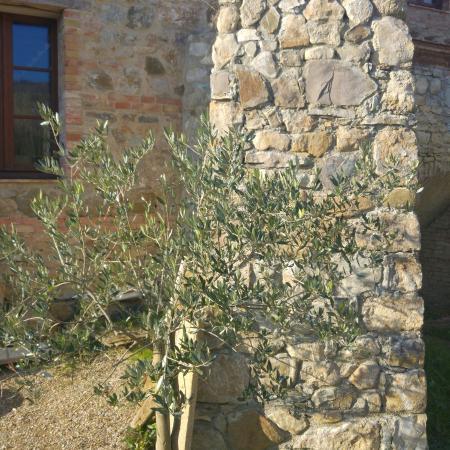 Montenero d'Orcia, Italia: Antico Molino D'Orcia