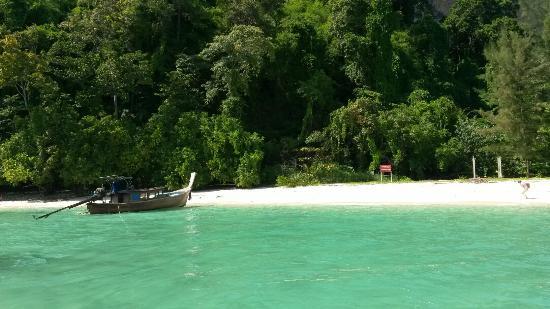 Местные джунгли - Picture of Poda Island, Ao Nang - TripAdvisor