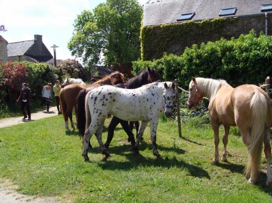 Gorvello Cafe: chemins équestres passe au village