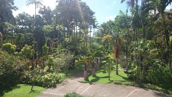 Le jardin des brom liac es picture of jardin de balata for Jardin balata