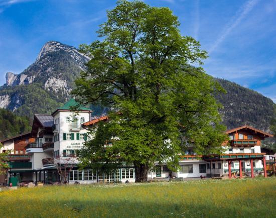 Gasthof Bad Hochmoos: Teilansicht mit der Sommerlinde