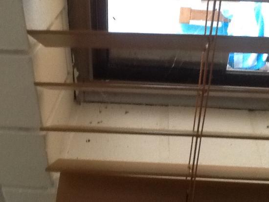 Coochiemudlo Island, Австралия: Dead flies on the window sills