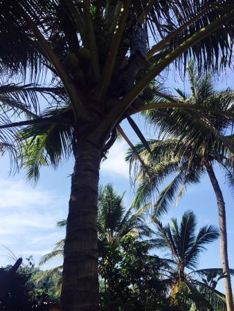 Harihareshwar Beach Resort: photo2.jpg